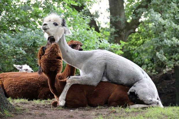 Lohnt Sich Der Tierpark Nordhorn Tiere Und Park