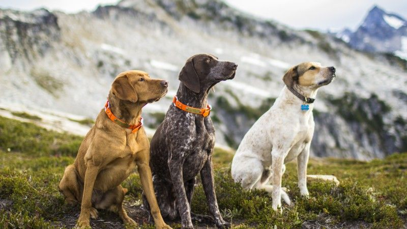 How To Pick And Train The Ultimate Adventure Dog Dog Training