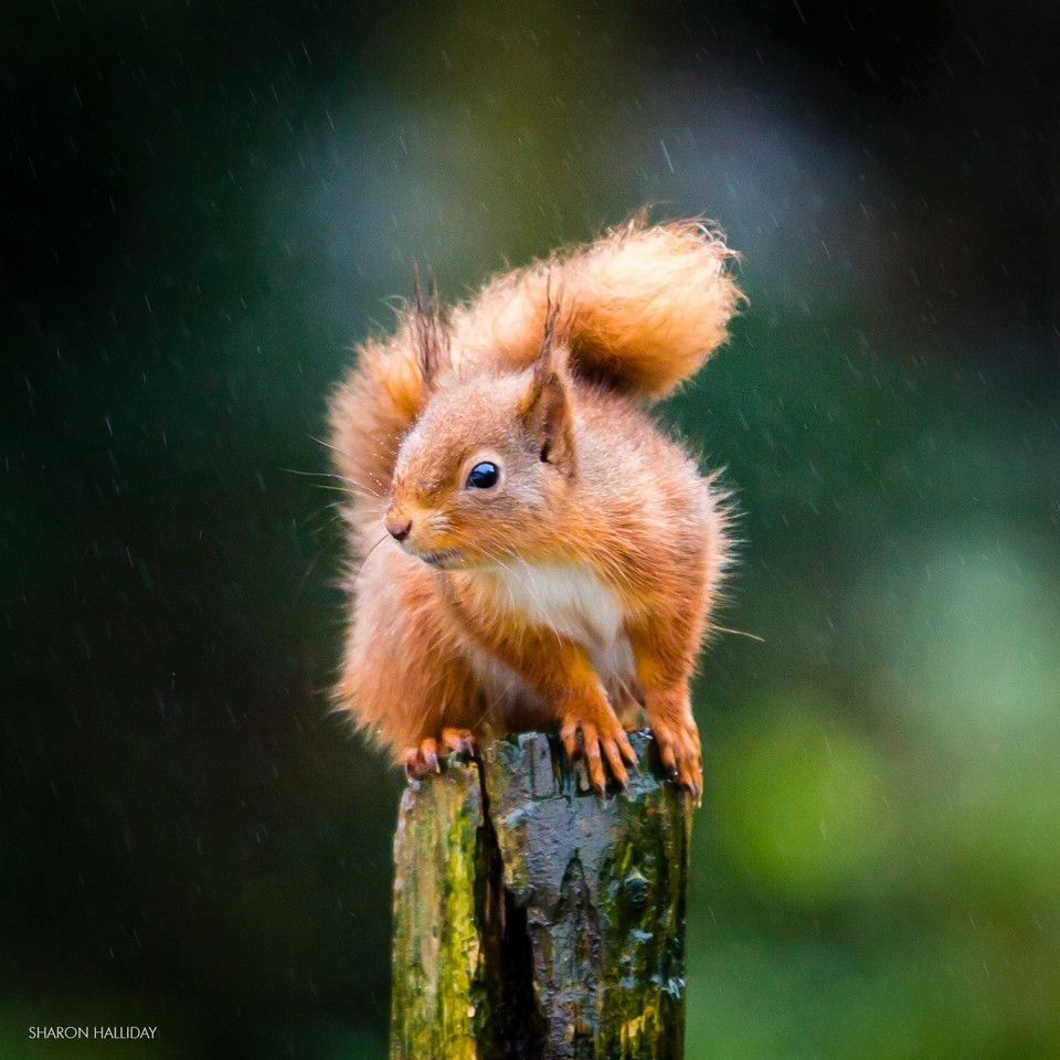 Photo Gunther on post by sisterblue  on 500px