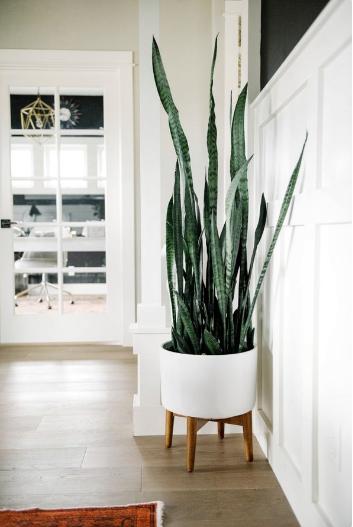 Piante Da Appartamento Per Stanze Con Poca Luce Idee Green