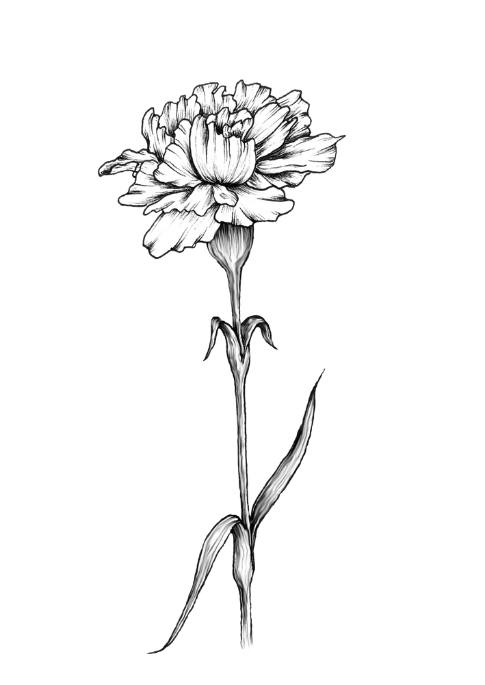 Single Carnation Art Print By Dashblossoms X Small In 2020 Carnation Flower Tattoo Carnation Tattoo Birth Flower Tattoos