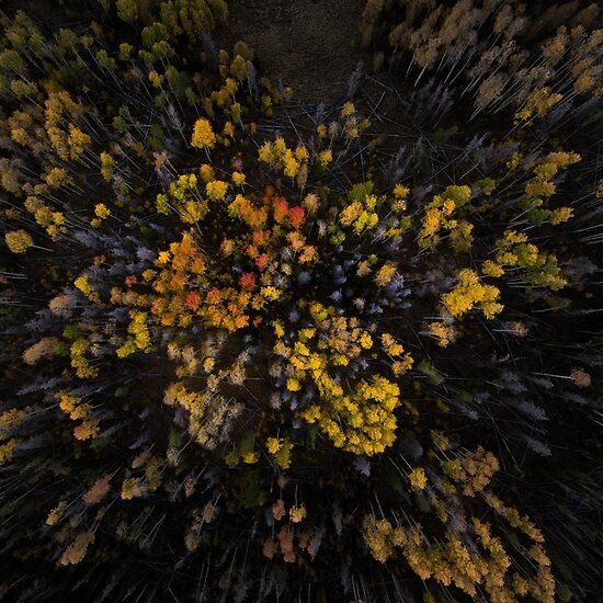 'Forest Drone View' Canvas Print by EndersendYT
