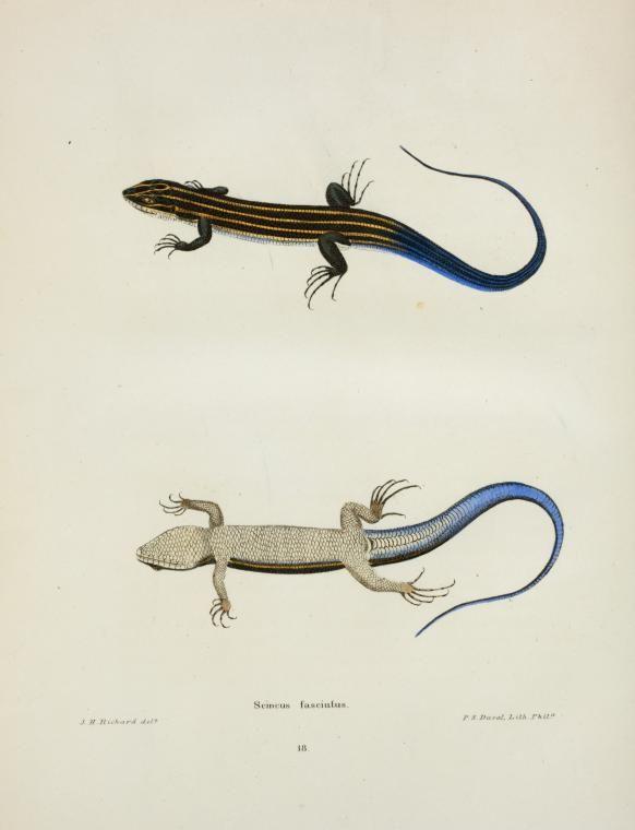North American herpetology; or, A description o... |  1842