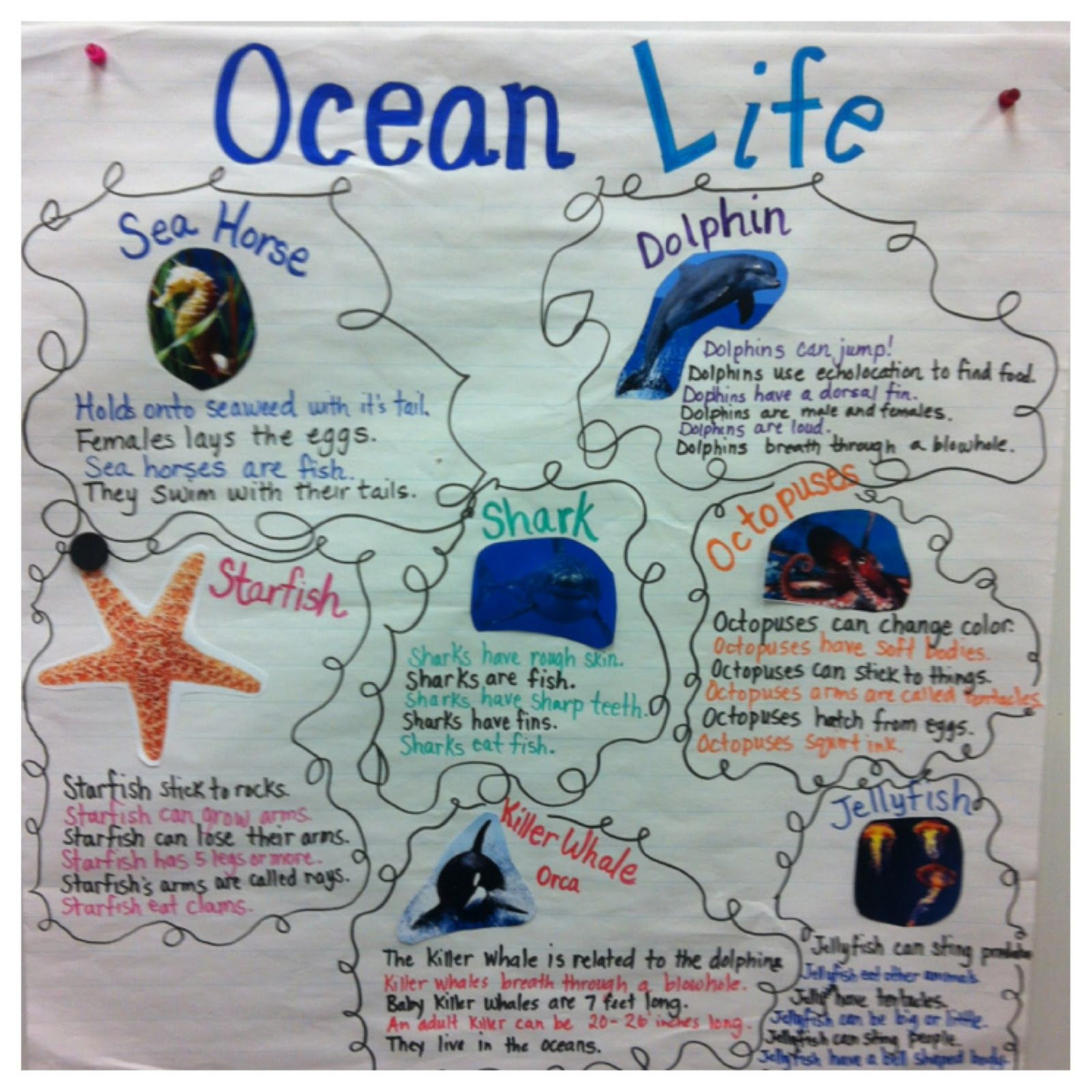 Image Result For Starfish Anchor Chart
