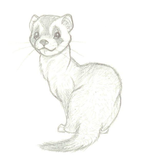 Ferret By Wolfypuppy Deviantart Com On Deviantart Animal Sketches