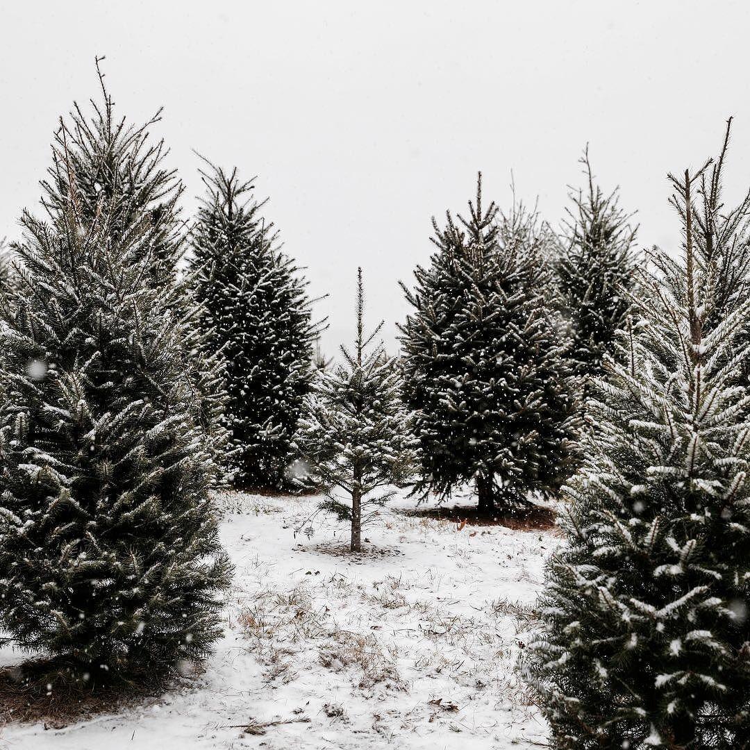 Snowy Winter Trees Photography Winter Christmas Winter Wonder Christmas Aesthetic