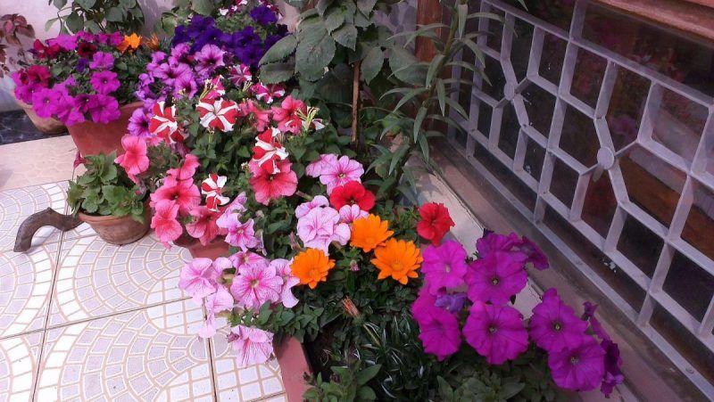 Galleria foto Quali piante e fiori scegliere per il