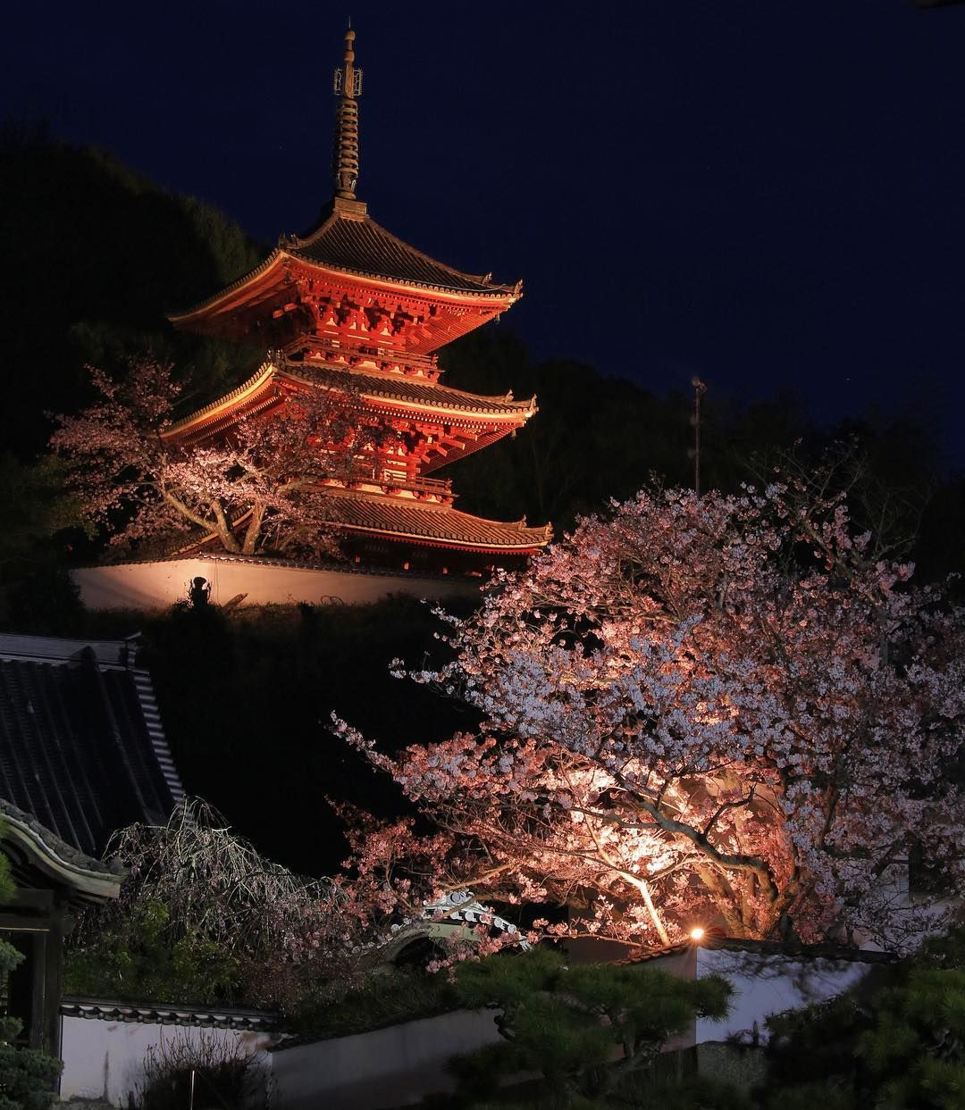 location 西国寺  一夜限りのライトアップ  Date 2016.4.2  #team_jp#team_jp_西#team_jp_春色#lovers_nippon#loves_nippon#canon#canon_photos#igers#IGersip#ig_japan#icu_japan#japan_night_view#bestjapanpics#igworldclub#ig_worldclub#snapshot#special_shots#worldbestshot#尾道#onomichi#scenery#landscape#igscglobal#turkinstagram#cherryblossom#japan by ce5dmk3