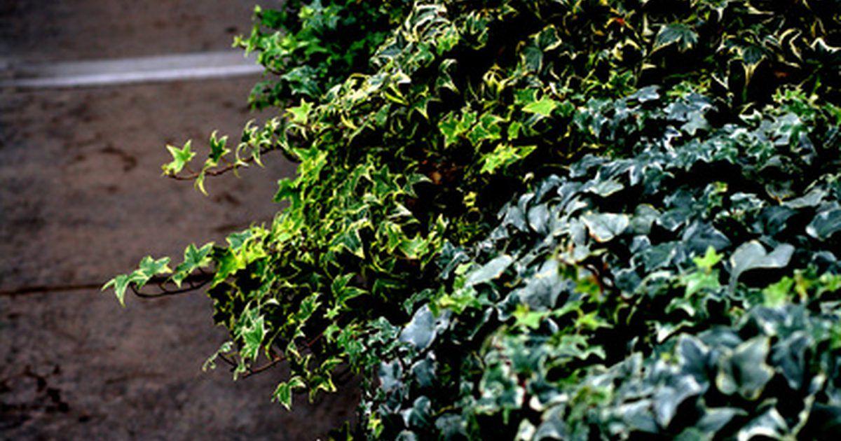 Único Plantas Exterior Mucho Sol Galería - Ideas de Diseño de ...