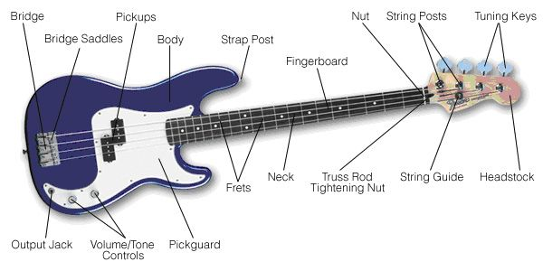 Diagram Anatomy Of An Electric Bass Guitar And Parts Guitar Bass Guitar Bass Guitar Parts