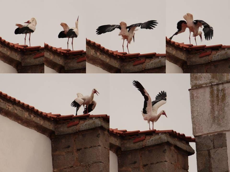 Marca Extremadura | Extremanatural - Blogs hoy.es