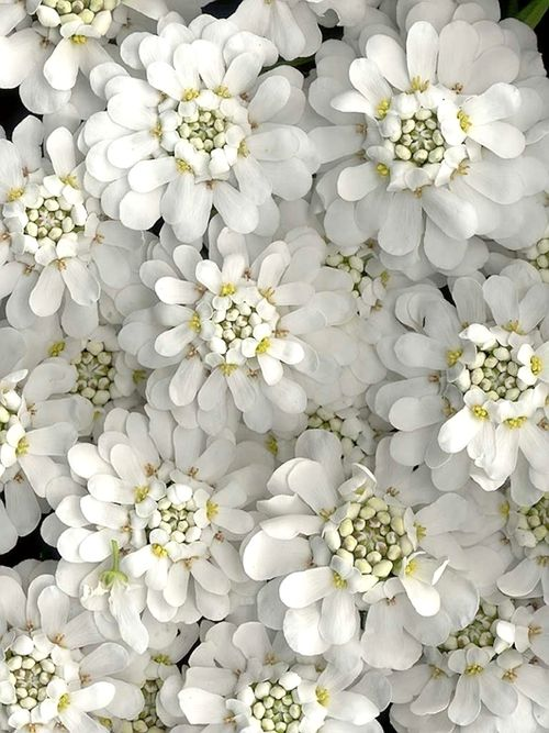 Maries tumblr daily notes colors pinterest flowers white maries tumblr daily notes mightylinksfo
