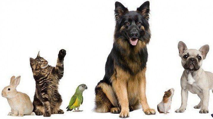 Petition · PETS ARE NOT PROPERTY Petitioning For the