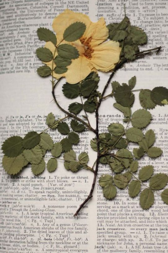 Winterberry Pressed Flower Art Pressed Flowers Dried Flowers