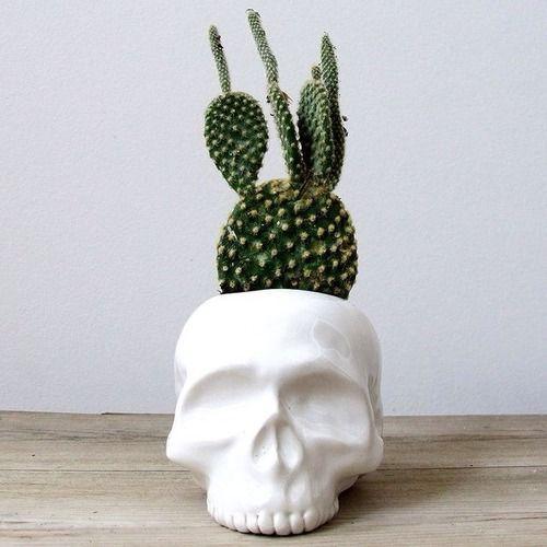 cactus, skull