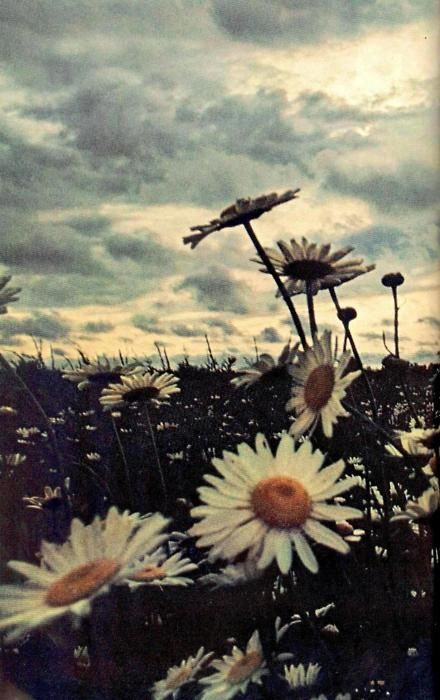 Daisies... kind of a depressingly beautiful shot. So Teddy Roosevelt Badlands Love