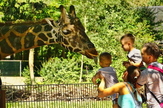 【5ヶ月の赤ちゃんと動物園】いつから行く?持って行くモノ7選 | オクラ遥ブログ