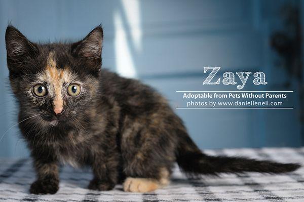 Zaya Is A Tortoiseshell Kitten Adoptable From Www Petwithoutparents Net In Columbus Ohio Pets Cute Dogs Kitten