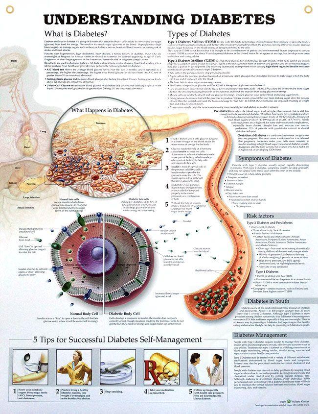 Understanding Diabetes (3E) 20x26 | Gestational diabetes, Diabetes ...