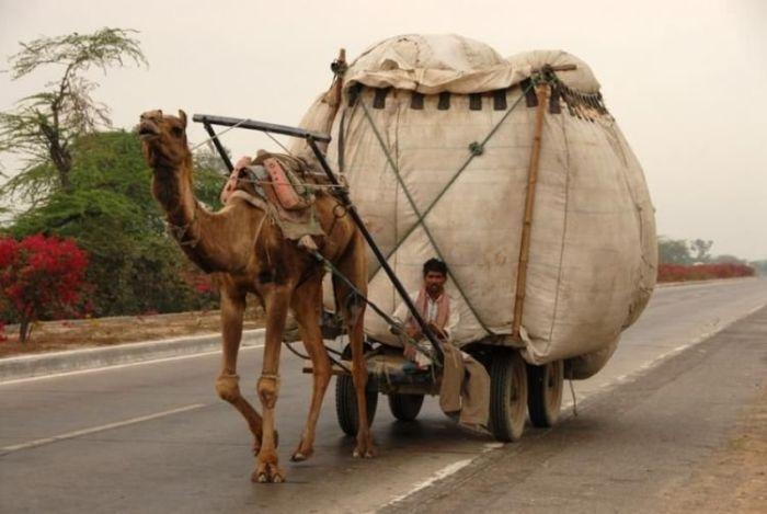 camel-cargo.jpg (700×469)