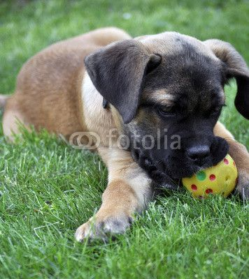 Puppy of dog with a ball