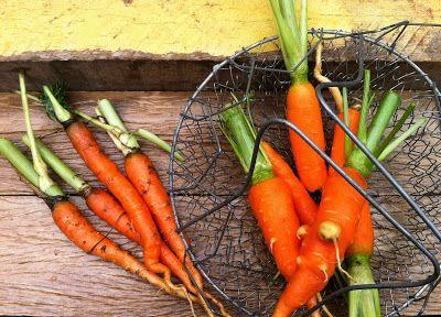 come-se: Cenoura como nunca vi. Ou Pão de cenoura velha