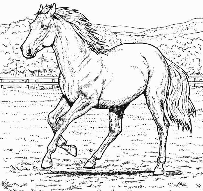 Desenhos Colorir Pintar Cavalos 2 Com Imagens Adult Coloring