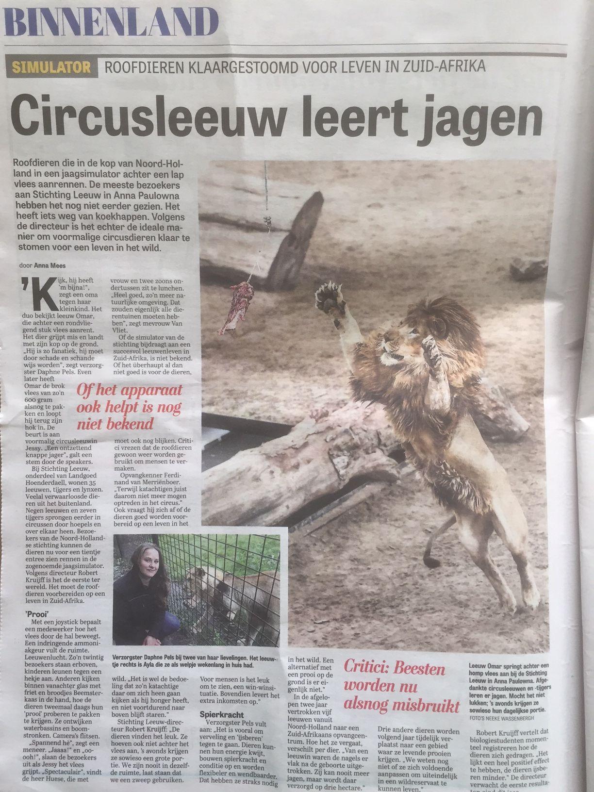 Ayla, vorig jaar door 7W geadopteerd, in De Telegraaf. Paginagroot aandacht voor het werk van Stichting #Leeuw en Landgoed Hoenderdaell in de krant van afgelopen zaterdag. #Lion