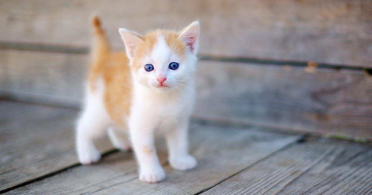 تفسير رؤية القطط في المنام للمرأة موسوعة طيوف Kittens Cutest Baby Cats Cat Ages