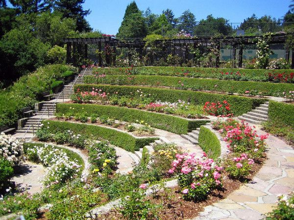 oakland ca rose garden | Berkeley urban shoot | Pinterest | Gardens