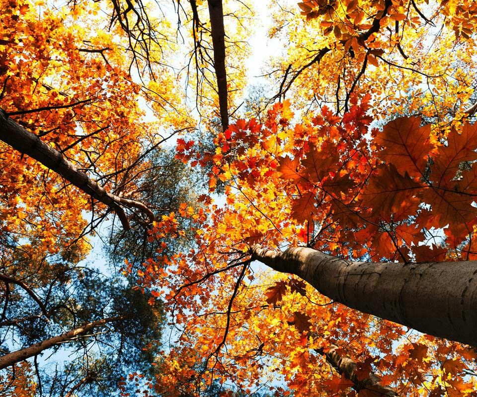 Reach for the heavens Landscape wallpaper, Autumn