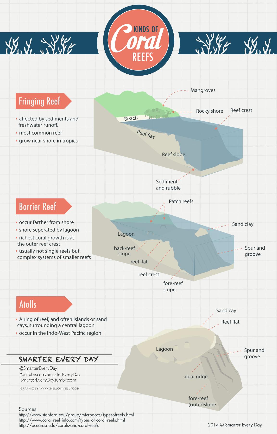 Types Of Coral Reefs Coral Reef Reef Marine Biology