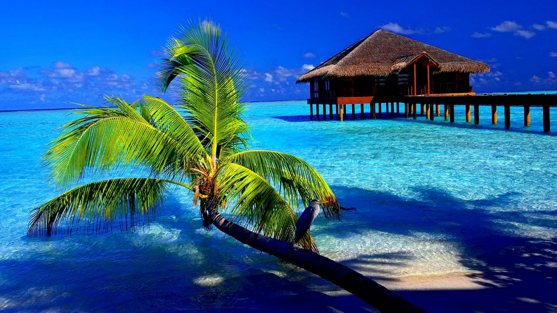 + Tropical Beach Backgrounds, Wallpapers, Images, Pictures