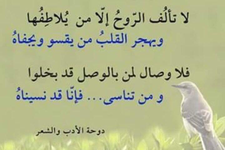 لا تألف الروح إلا من يلاطفها Sweet Quotes Inspirational Quotes Quotes