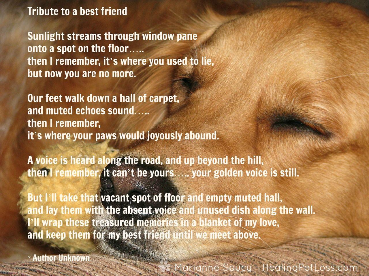 Healing Pet Loss Quote Dog Poems Pet Loss Pet Poems