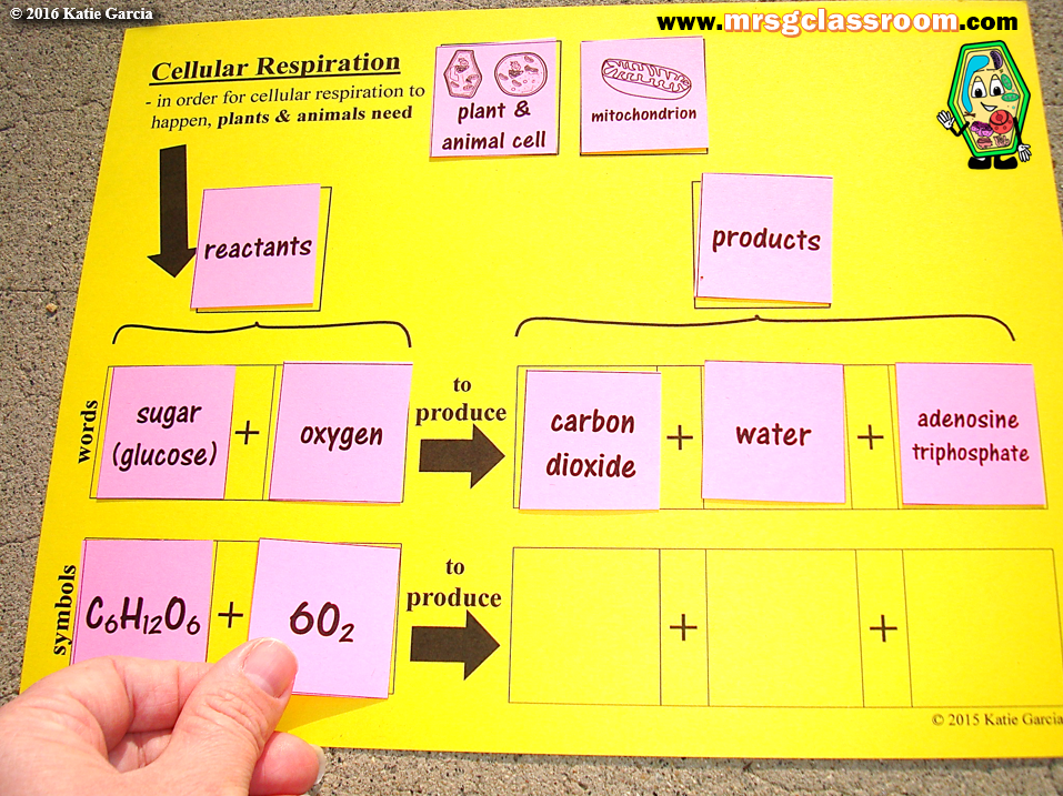 Cellular Respiration Equation Cellular respiration