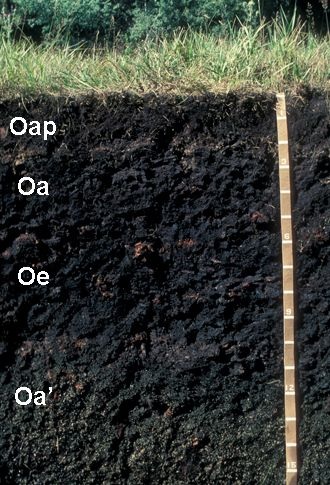 Histosol the peat muck soils of the world usually more for Soil near me
