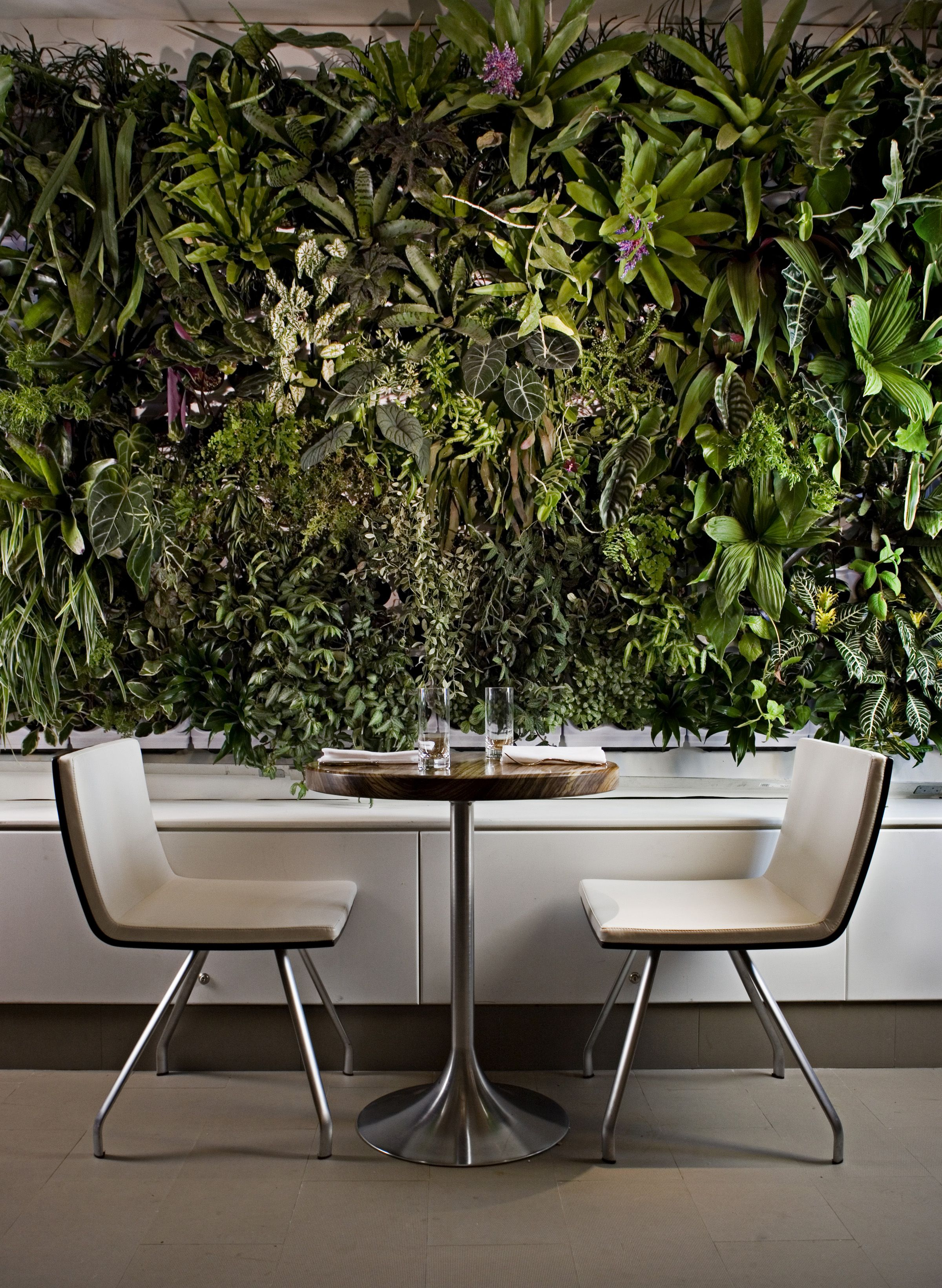vertical garden...plant wall