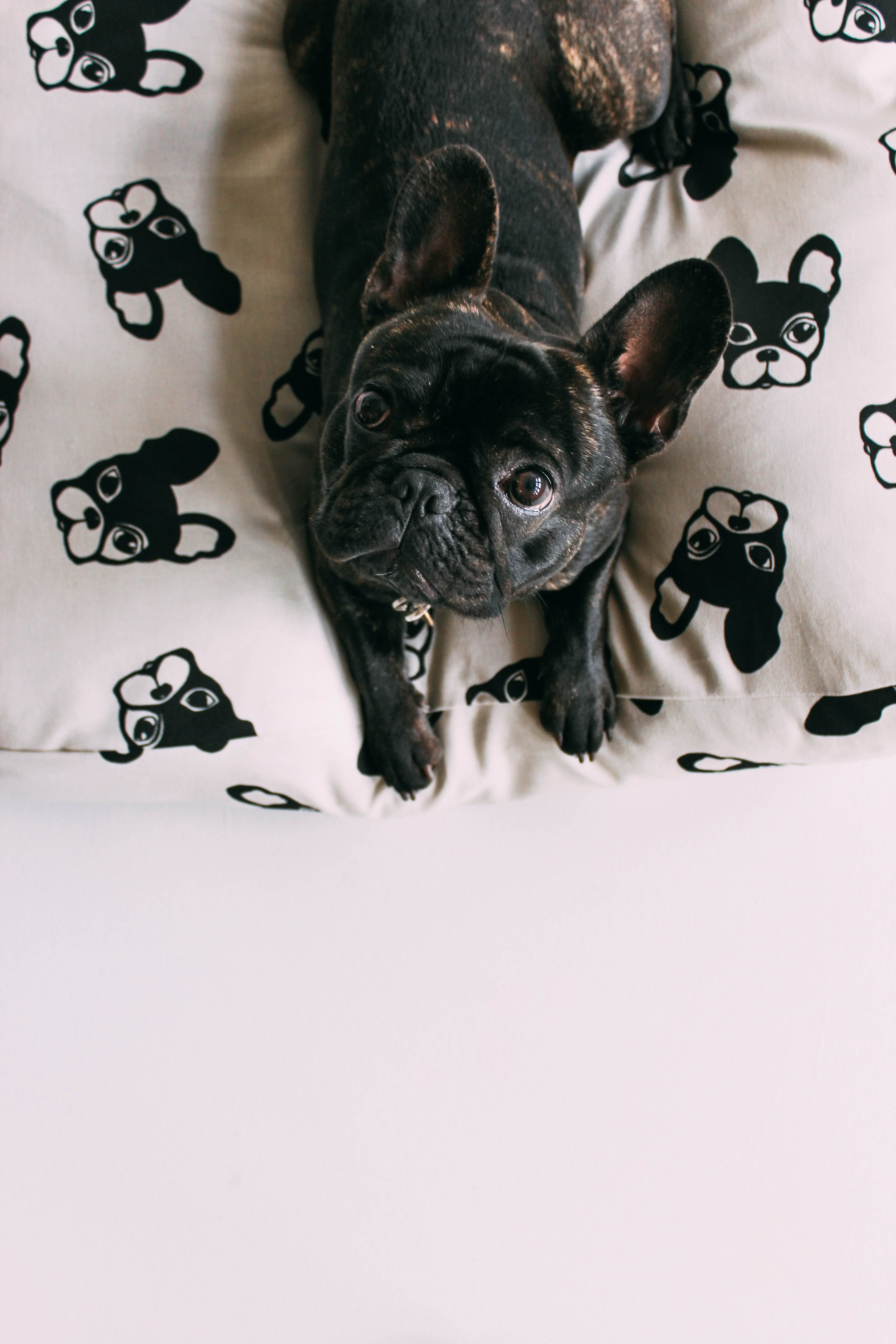 All Ears Floor Cushion French Bulldog Animals For Kids Pets