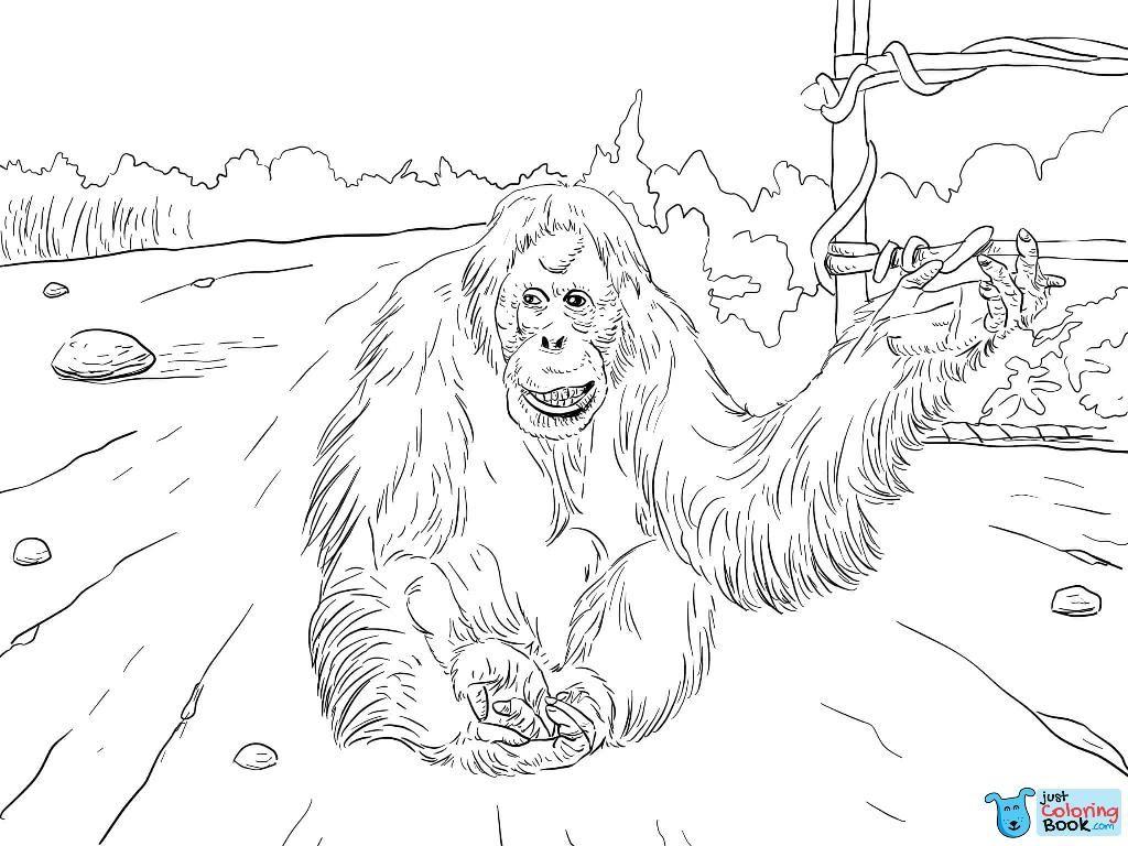 Sumatran Orangutan Coloring Page