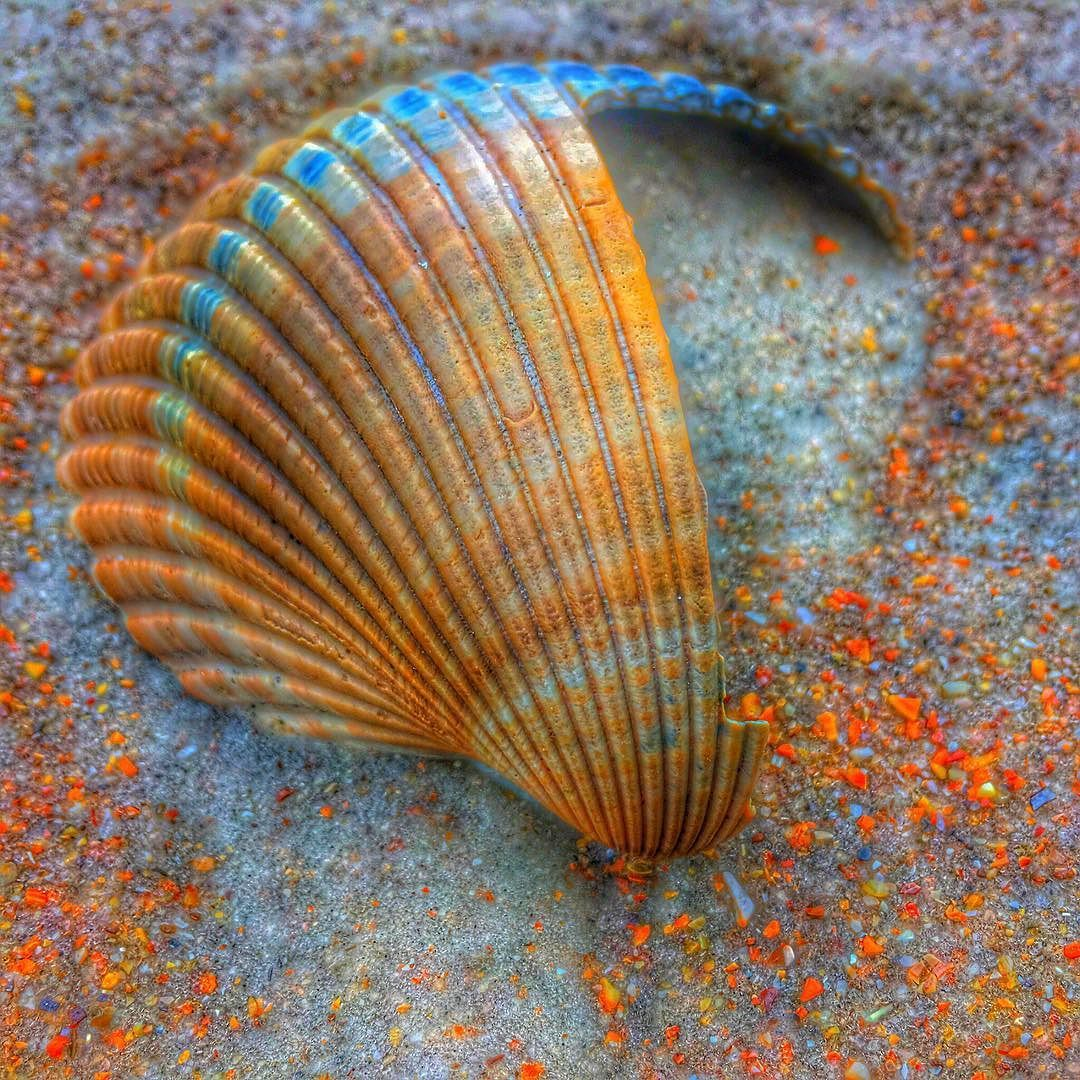 Seashells are truly love letters in the sand...some are