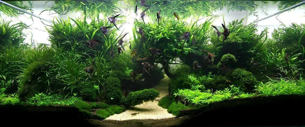 Planted aquariums yahoo image search results aquarium for Planted fish tank