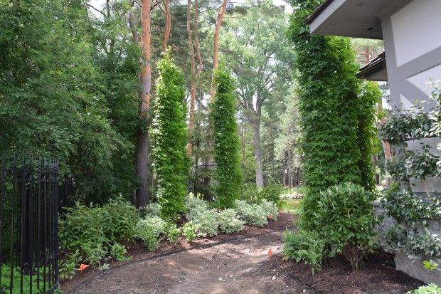 Pin On Gardening Miscellaneous Plants