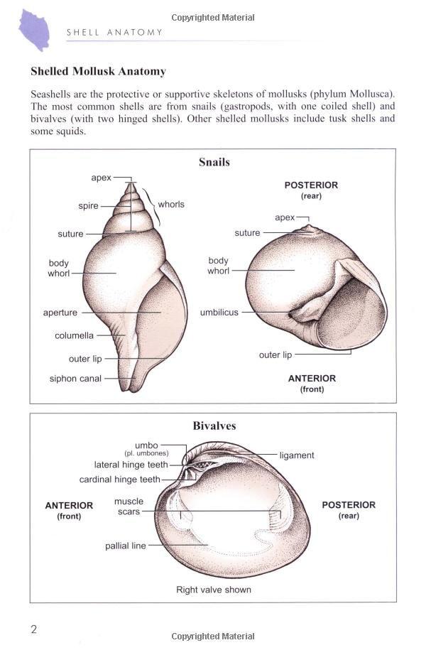 Floridas Seashells Snail Anatomy Florida Dreaming Pinterest