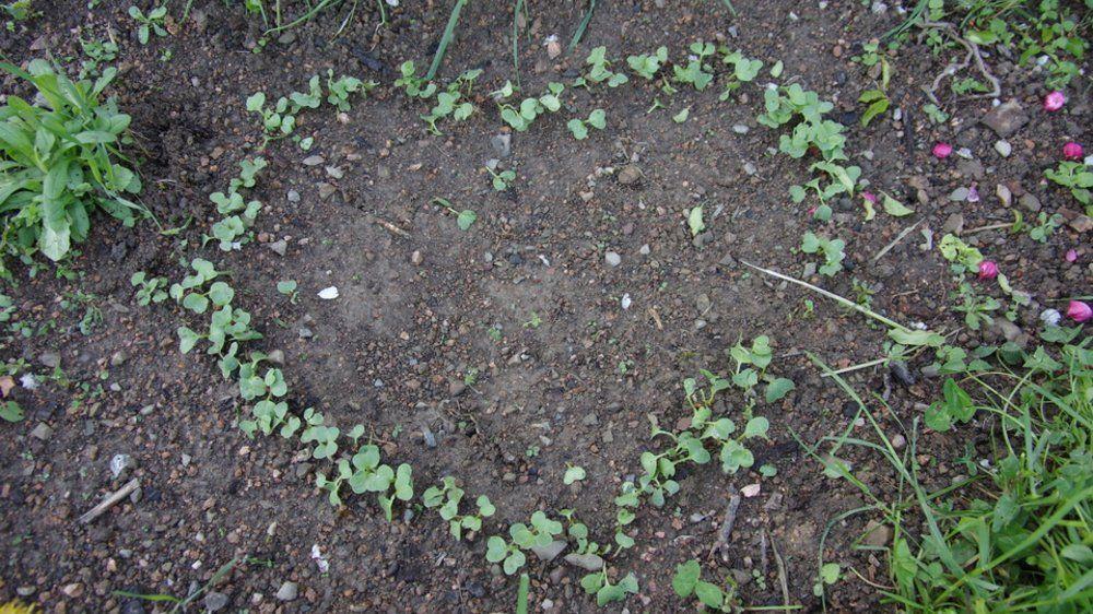 Les 25 meilleures id es de la cat gorie semer des radis - Comment semer des radis ...