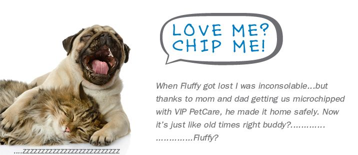15 Chip And Lifetime Registration At Paws Plus Clinic At Tractot Supply Body Image Love Me Chip Me My Love Your Pet Pet Care