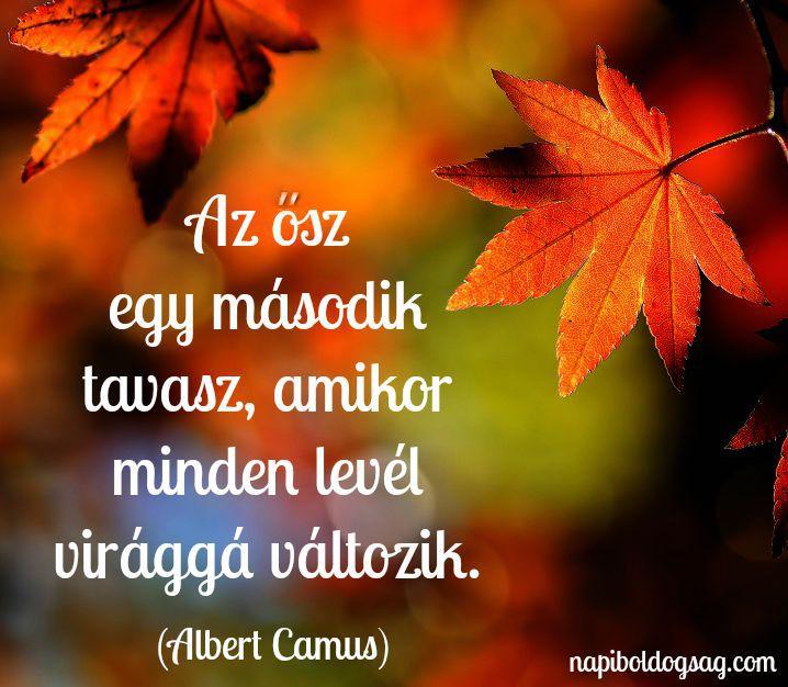 szép őszi idézetek az ősz egy második tavasz | Affirmation quotes, Funny quotes, Life