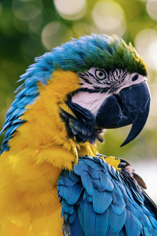 Pin by Jesse on drawings Blue macaw, Macaw parrot