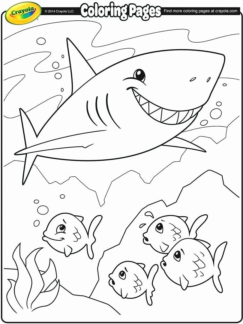 Hammerhead Shark Coloring Page Elegant Hammerhead Shark Drawing at  Getdrawings in 2020 | Shark coloring pages, Fish coloring page, Crayola coloring  pages