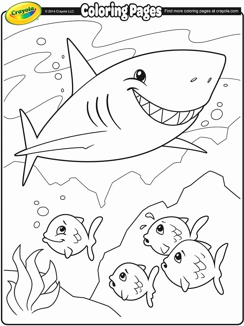Shark Adult Coloring Pages Inspirational Hammerhead Shark Drawing